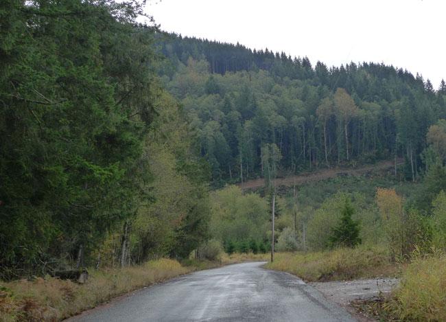 paved_steep