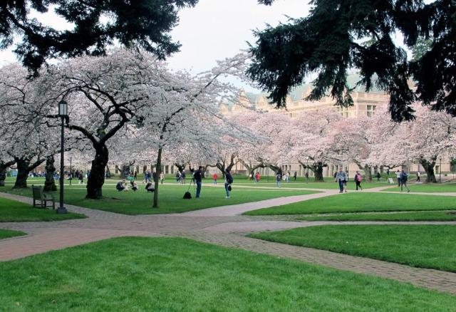 cherry_trees_200