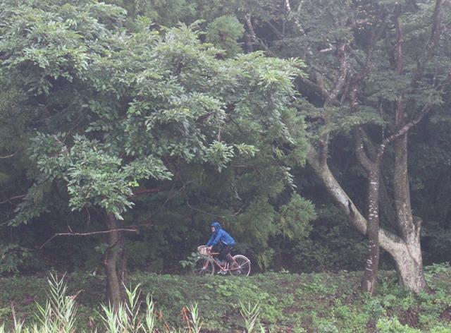 road_trees